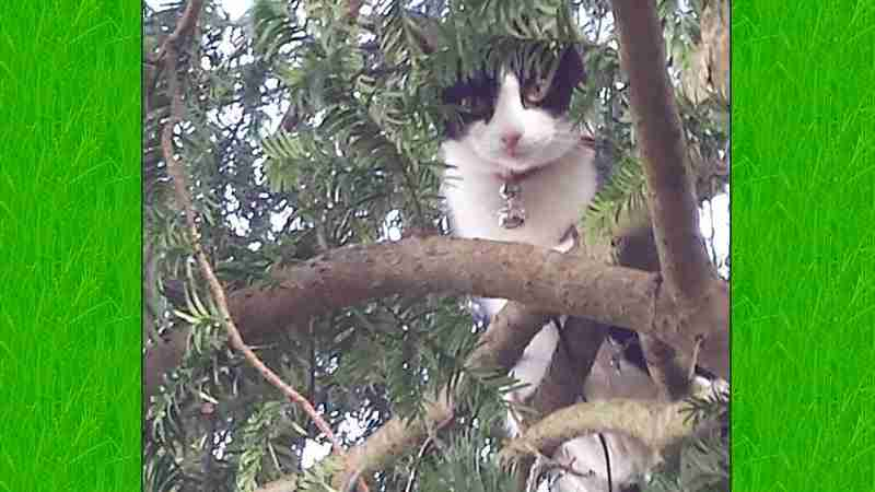 Sybil in tree